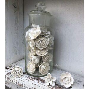 Ivoor witte bloem knoppen