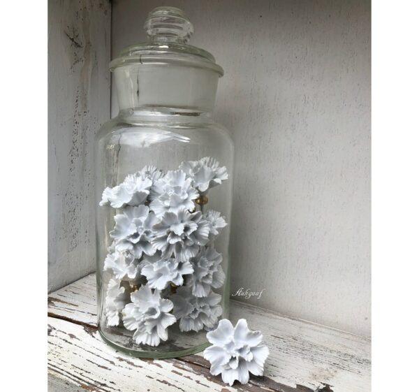 Witte bloem knop